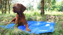 IMAC Chladící podložka pro psy - D 96 x Š 80 cm